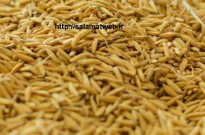 ارزش تغذیه ای سبوس برنج