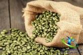 دانستنی های مفید در مورد قهوه سبز
