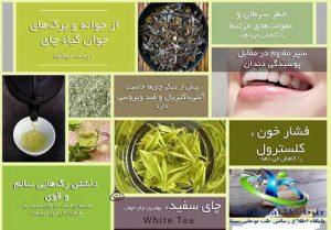 چای سفید ضد استرس
