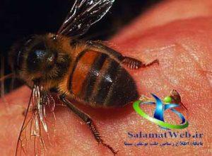 درمان نیش زنبورهای زرد