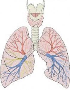 از ریه هایتان مراقبت کنید