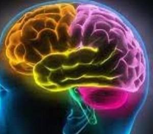 از انواع هوش چه می دانید؟