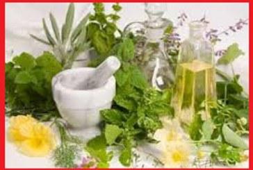 با گیاهان دارویی موثر در درمان ناباروری آشنا شوید