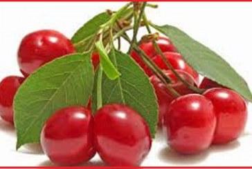 با خواص میوه ای مفید به نام آلبالو آشنا شوید