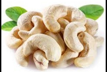 از خواص بادام هندی چه می دانید؟