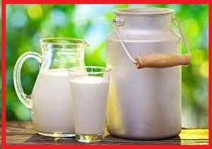 شیر پرچرب مفید جهت اضافه وزن