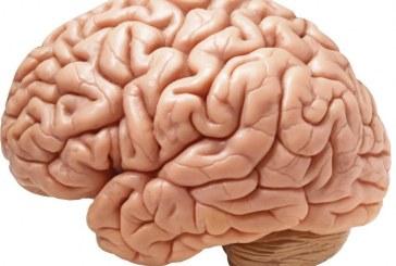 نقش تغذیه در بهبود عملکرد مغز