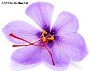 ارزش تغذیه ای زعفران