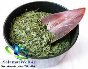 چای سبز موثر در افزایش هوش