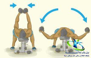 ورزش های افزایش سایز سینه
