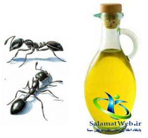 روغن مورچه برای نوزاد