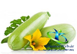 کدو سبز گیاهی کم کالری