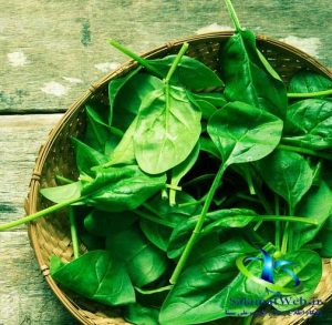 طرزاستفاده از مواد غذایی کم کالری