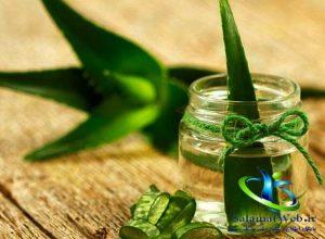 درمان خانگی گال با گیاه آلوئه ورا