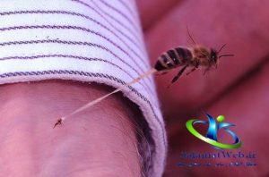 درمان نیش زنبورهای عسل
