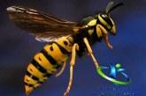 درمان نیش زنبور+ ازبین بردن تورم محل گزیدگی