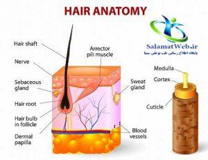 درمان اسکار شکستگی سر و کم پشتی مو سر در خانمها و آقایان