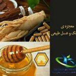 جینسینگ و عسل چه خواصی دارند؟+معرفی گیاه جینسینگ