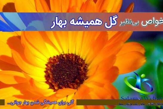 خواص گل همیشه بهار+مضرات دمنوش گل همیشه بهار