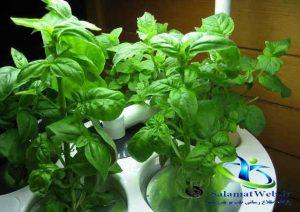 چربی سوزی با گیاهان دارویی