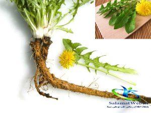 داروی گیاهی برای لاغری سریع