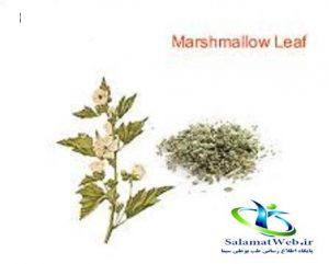 عکس گیاه مارشمالو