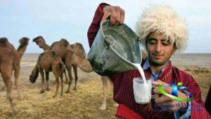 طرز تهیه دوغ شتر