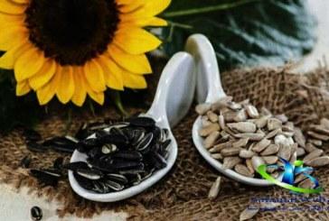تخمه آفتابگردان+فواید و مضرات تخمه آفتابگردان