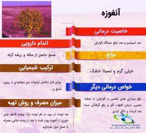 قسمت های دارویی گیاه آنغوزه