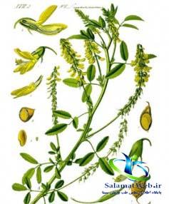 خواص گیاه ناخنک در طب سنتی