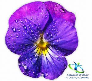 خواص گل بنفشه برای نوزادان