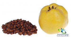 مضرات میوه به