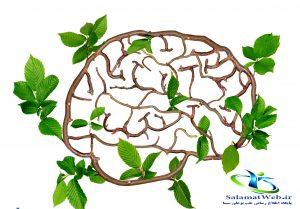 تقویت حافظه با گیاهان دارویی