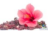 گیاه دارویی گل ختمی و خواص آن +مضرات استفاده از گل ختمی