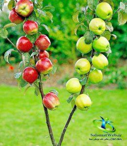 خواص درمانی میوه سیب