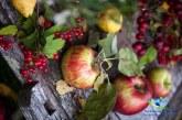 میوه سیب نماد سلامتی و زیبایی سفره هفت سین