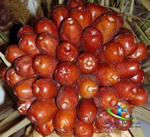 پودر سنجد برای چاقی