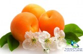میوه زردآلو و خواص درمانی آن+مضرات زردآلو و هسته زردآلو