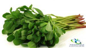 خرید سبزی خرفه