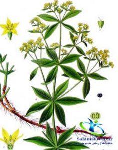 پودر روناس