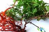 روناس الماس گیاهی طبیعت+طرز استفاده از روناس