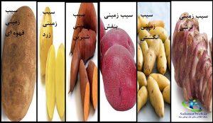 انواع سیب زمینی