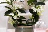 گل یاسمن و انواع آن+خواص دارویی گل یاسمن
