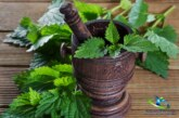 گیاه گزنه چگونه به سلامتی کمک میکند؟ عوارض گزنه