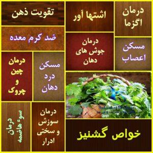 خواص سبزی گشنیز در طب سنتی