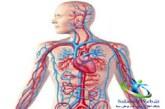 گردش خون را چگونه تقویت کرده و برای بهبود آن چه بخوریم؟