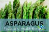 گیاه مارچوبه مفید برای غلبه بر بیماری ها+نحوه مصرف مارچوبه
