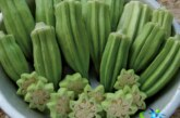 گیاه بامیه و معجزه آن در کاهش قند خون +نحوه مصرف بامیه