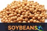 دانه سویا و مزایای آن برای سلامتی +طریقه مصرف دانه سویا