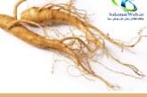 گیاه جینسینگ چیست؟ + خواص و عوارض جینسینگ در طب سنتی